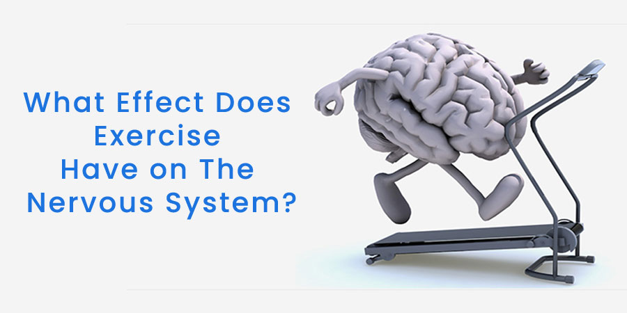 What Effect Does Exercise Have on The Nervous System?